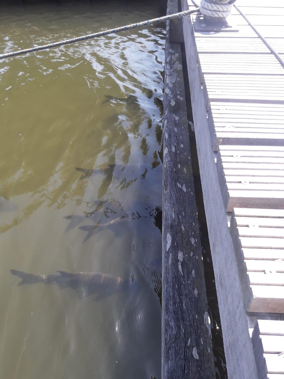 Vissen in haven lemsterpoort